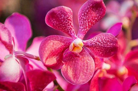 Szlovéniai buszos utazás orchideafarm látogatással