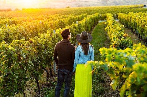Őszi barangolás a Villányi borvidéken borkóstolóval