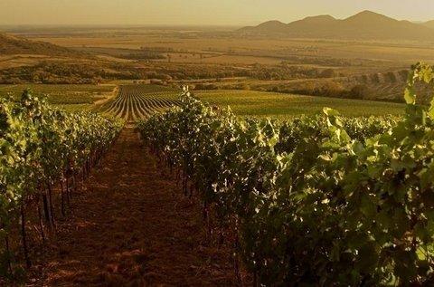 Őszi borkalandok borvacsorával Tokajban
