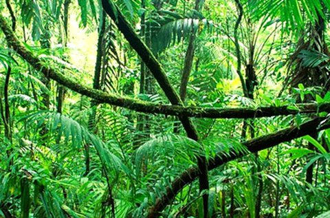 Dzsungel szabadulós játék 2 fő részére 75 percben