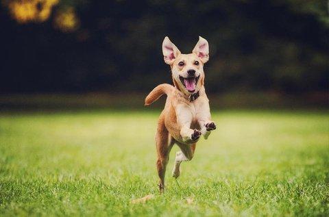 1 órás hétvégi műnyulas kutyafuttatás