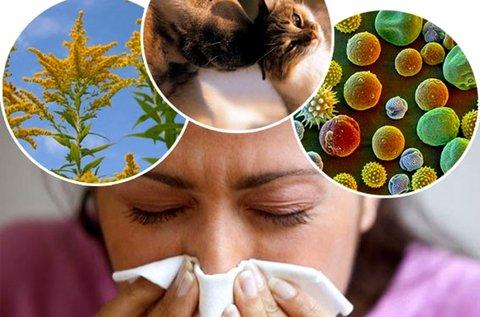 104 pontos allergia vizsgálat Salvia mérőműszerrel