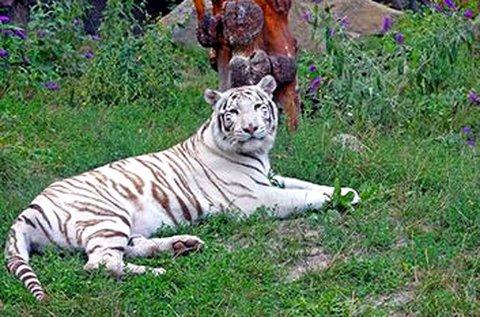 Kiruccanás a Pozsonyi Állatkertbe és Dínóparkba