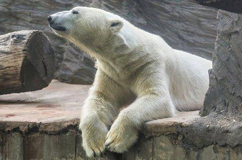 Bécsi kirándulás kastély és állatkert látogatással