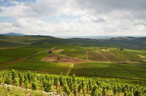 Kora tavaszi feltöltődés borkóstolóval Tokajban