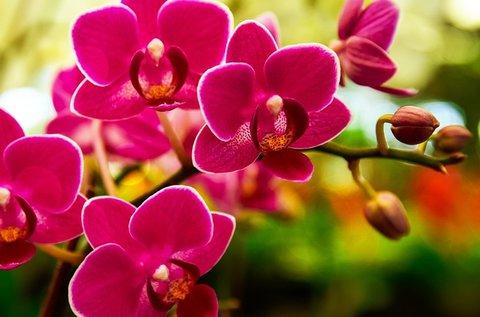 Szlovéniai kiruccanás orchideafarm látogatással
