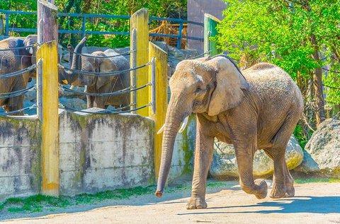 Nyári buszos kirándulás a Schönbrunni állatkertbe