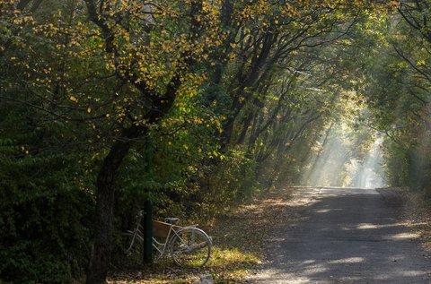 Idilli pihenés az erdő mélyén, Fehérvárcsurgón