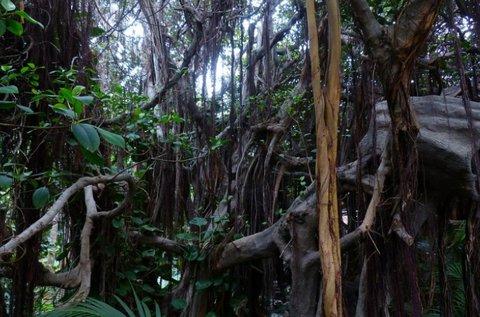 Dzsungel szabadulószoba 3-4 fő részére