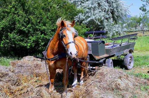 Páros lovaskocsikázás a pilisi dombvidék festői táján