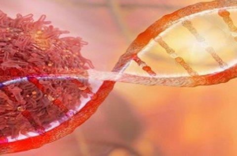 Laborvizsgálat gyakori ráktípusok szűrésével