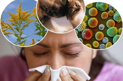 Allergia vizsgálat 64 anyagra EAV géppel