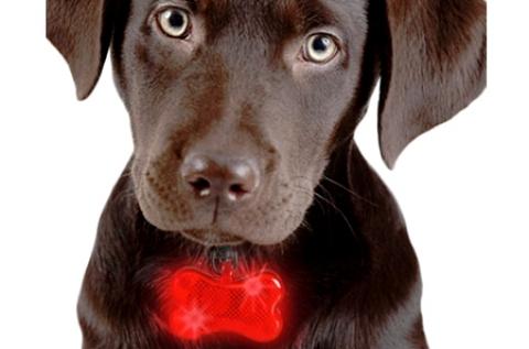 Csont alakú LED-es névtábla kutyáknak
