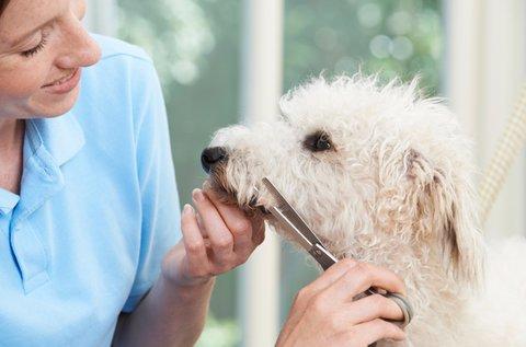 Kutyakozmetika tanácsadás fürdetéssel