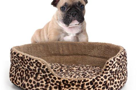 Pet Prior kutyaágy párnával