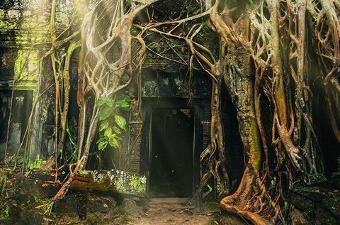 Amazonas szabadulószoba 1 órában