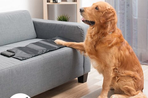 InnovaGoods kutya tréning szőnyeg