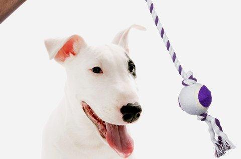 Pet Prior labda kötéllel kutyáknak