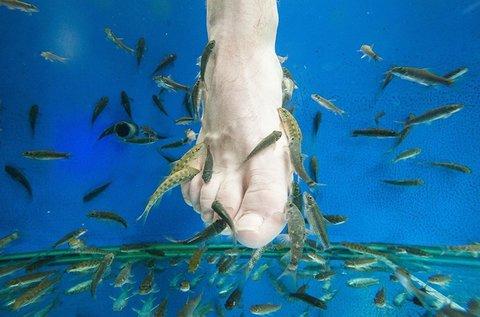 3 alkalmas halterápia halpedikűrrel