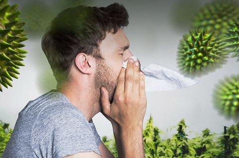 Elektroakupunktúrás allergia vizsgálat