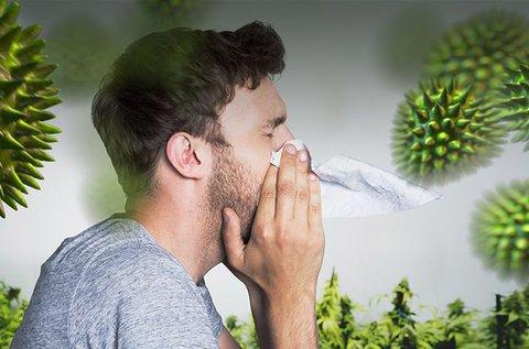 Akár 200 elemre kiterjedő allergiavizsgálat