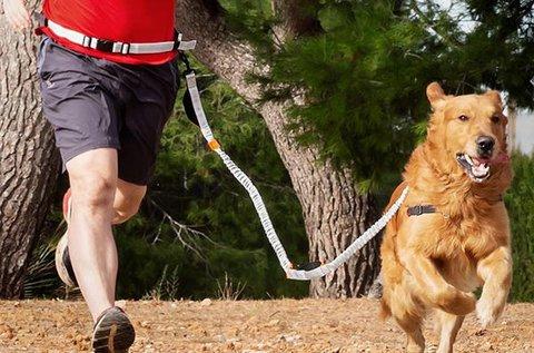Home Pet kutyapóráz kocogáshoz