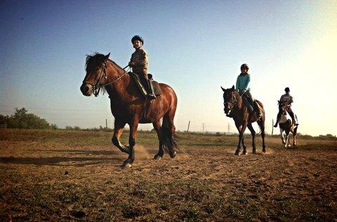 30 perces futószáras lovaglás kezdőknek