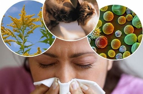 Fájdalommentes 104 pontos allergiavizsgálat