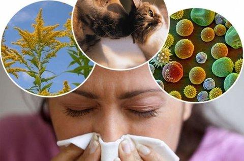 Átfogó allergia vizsgálat 104 allergénre