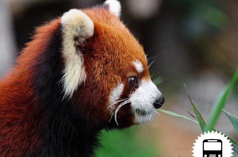 Buszos kirándulás a bécsi állatkertbe