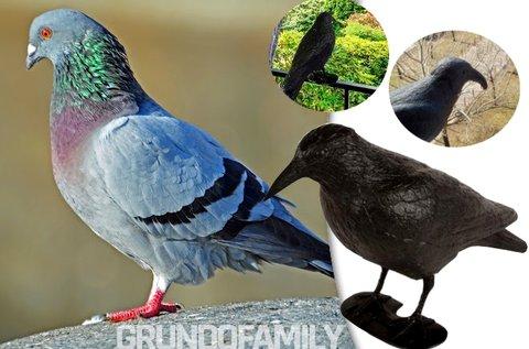 Tartsd távol a madarakat galambijesztő varjúval!