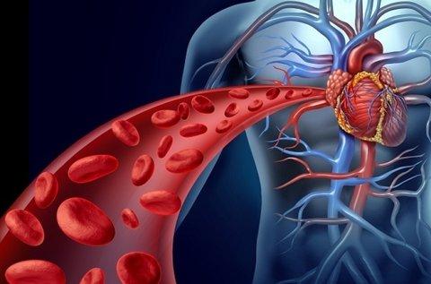 Komplex szív-, agyi- és érrendszeri felmérés