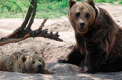 Veresegyházi felfrissülés Medvepark belépővel