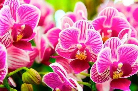 Buszos utazás a dobronaki Orchideafarmra