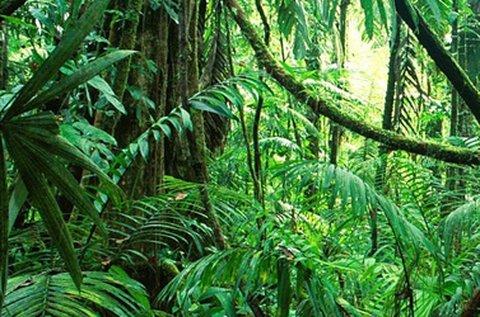 Kalandos Dzsungel szabadulószoba 2 főnek