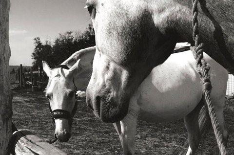 1 órás választható lovas program Mendén